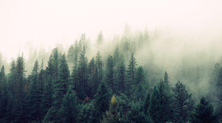 Bieganie w lesie – na co uważać?