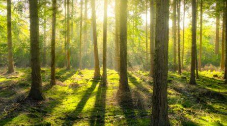 Bliżej natury, czyli bieganie w lesie