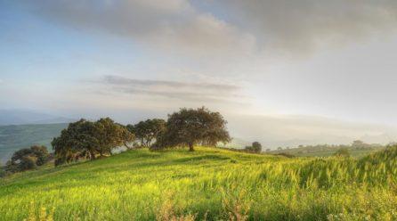 Trening na łonie natury – bieganie po łąkach